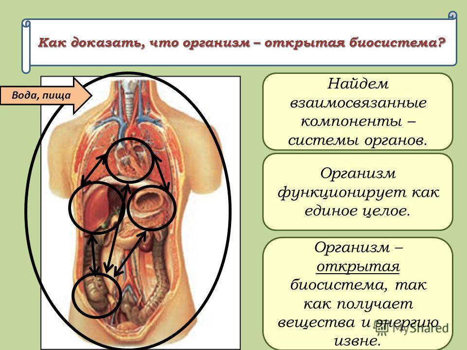 Как доказать, что организм – открытая биосистема? Найдем взаимосвязанные компоненты – системы органов. Организм функционирует как единое целое. Организм – открытая биосистема, так как получает вещества и энергию извне. Вода, пища