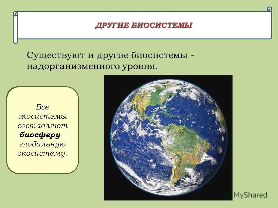 ДРУГИЕ БИОСИСТЕМЫ Существуют и другие биосистемы - надорганизменного уровня. Организмы одного вида составляют популяцию и вид. Популяции разных видов на одной территории составляют сообщество или экосистему. Все экосистемы составляют биосферу – глоба