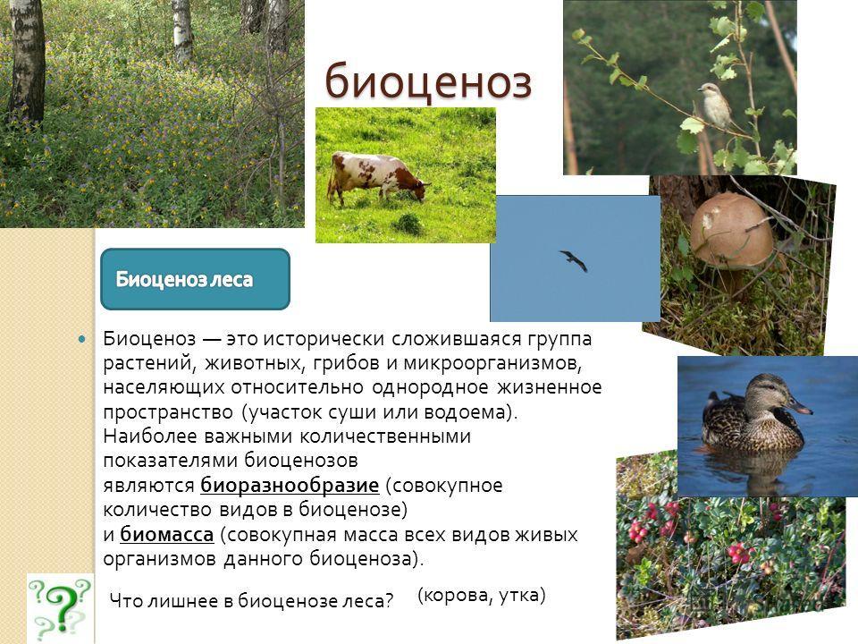 биоценоз Биоценоз это исторически сложившаяся группа растений, животных, грибов и микроорганизмов, населяющих относительно однородное жизненное пространство ( участок суши или водоема ). Наиболее важными количественными показателями биоценозов являют