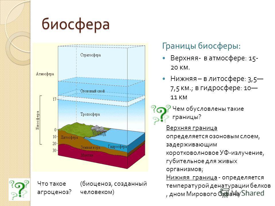биосфера Границы биосферы : Верхняя - в атмосфере : 15- 20 км. Нижняя – в литосфере : 3,5 7,5 км.; в гидросфере : 10 11 км Чем обусловлены такие границы? Верхняя граница определяется озоновым слоем, задерживающим коротковолновое УФ-излучение, губител