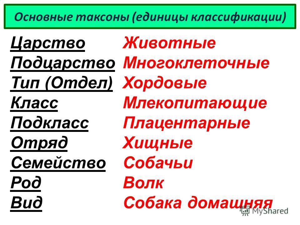 Основные таксоны (единицы классификации) Царство Подцарство Тип (Отдел) Класс Подкласс Отряд Семейство Род Вид Животные Многоклеточные Хордовые Млекопитающие Плацентарные Хищные Собачьи Волк Собака домашняя