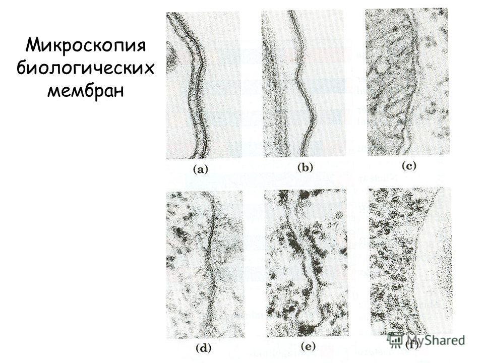 Микроскопия биологических мембран