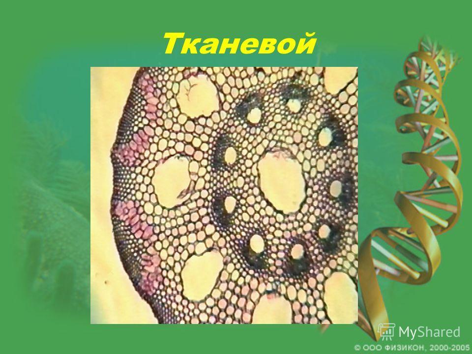 Тканевой