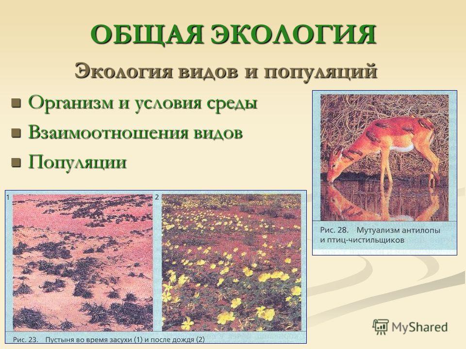 ОБЩАЯ ЭКОЛОГИЯ Экология видов и популяций Организм и условия среды Организм и условия среды Взаимоотношения видов Взаимоотношения видов Популяции Популяции