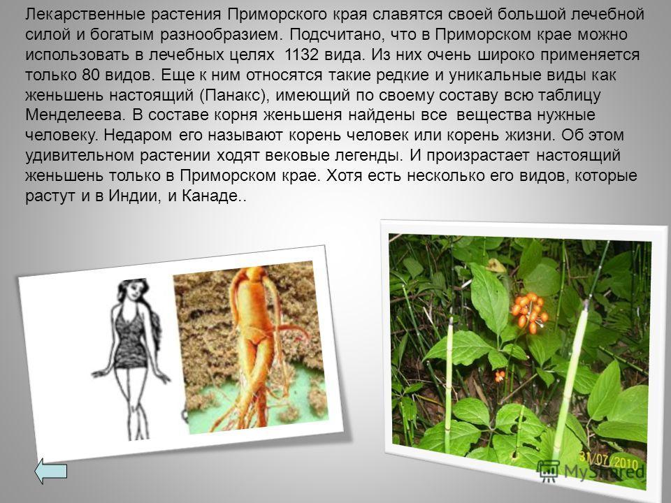 Лекарственные растения Приморского края славятся своей большой лечебной силой и богатым разнообразием. Подсчитано, что в Приморском крае можно использовать в лечебных целях 1132 вида. Из них очень широко применяется только 80 видов. Еще к ним относят