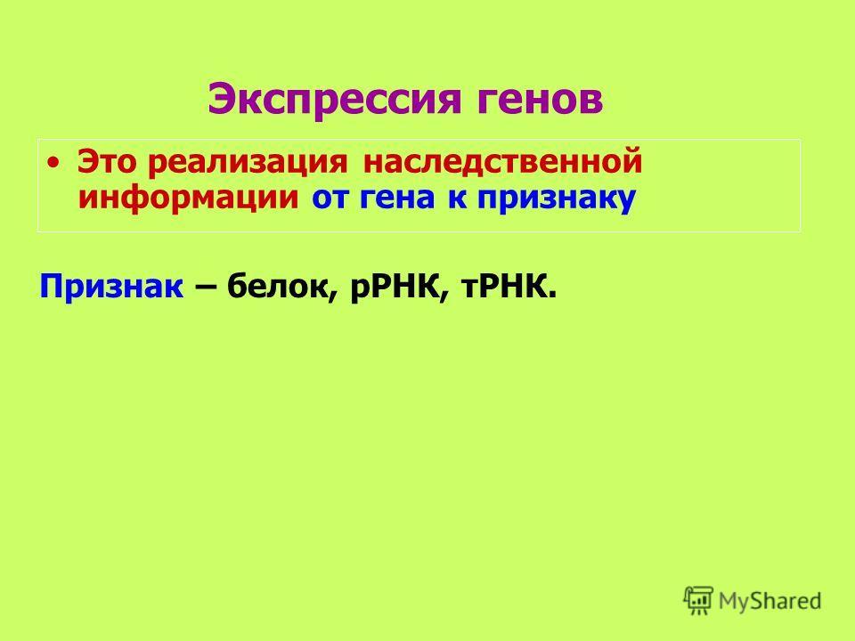 Экспрессия генов Это реализация наследственной информации от гена к признаку Признак – белок, рРНК, тРНК.