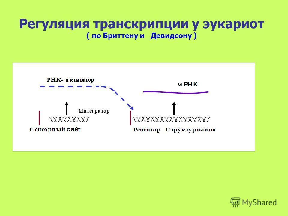 Интегратор Регуляция транскрипции у эукариот ( по Бриттену и Девидсону )