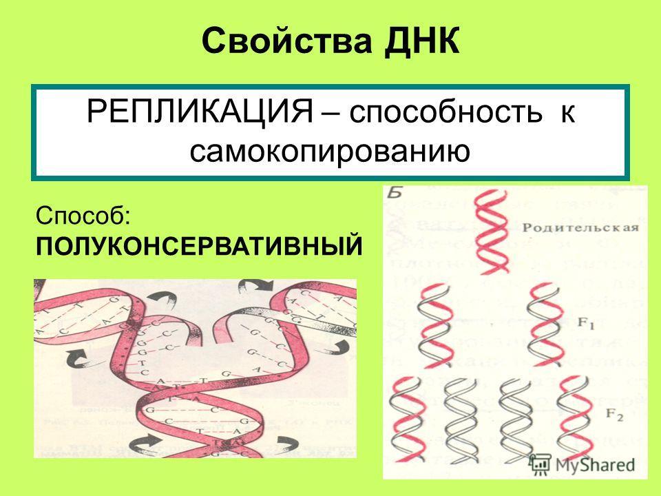 Свойства ДНК РЕПЛИКАЦИЯ – способность к самокопированию Способ: ПОЛУКОНСЕРВАТИВНЫЙ
