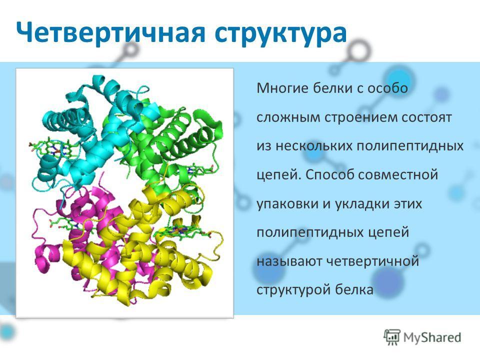 Четвертичная структура Многие белки с особо сложным строением состоят из нескольких полипептидных цепей. Способ совместной упаковки и укладки этих полипептидных цепей называют четвертичной структурой белка