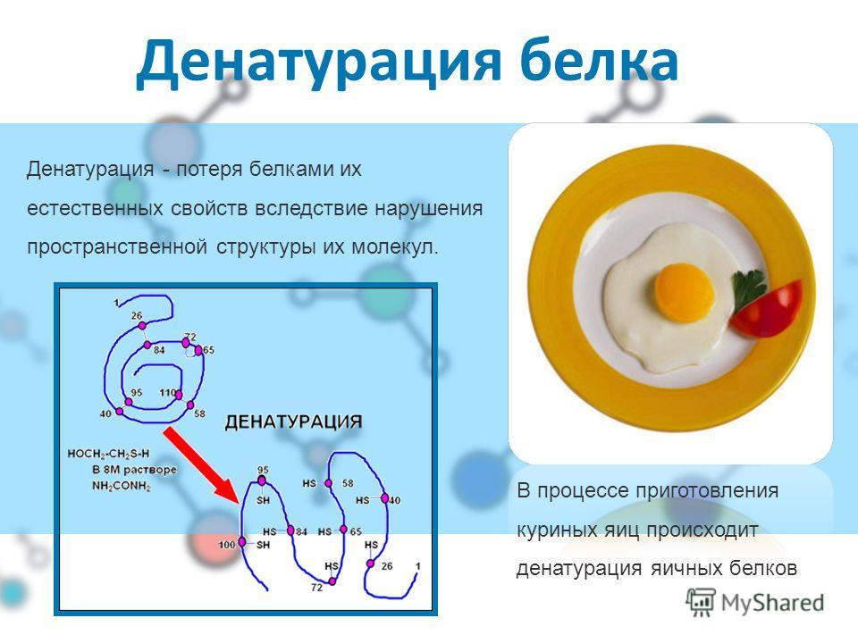 Денатурация белка В процессе приготовления куриных яиц происходит денатурация яичных белков Денатурация - потеря белками их естественных свойств вследствие нарушения пространственной структуры их молекул.