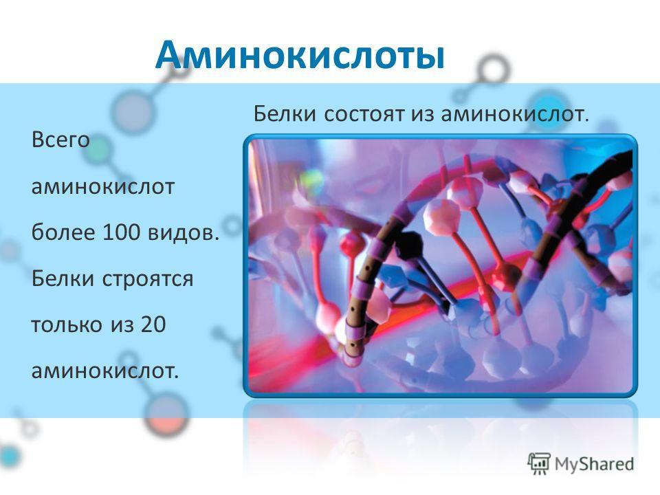 Аминокислоты Всего аминокислот более 100 видов. Белки строятся только из 20 аминокислот. Белки состоят из аминокислот.