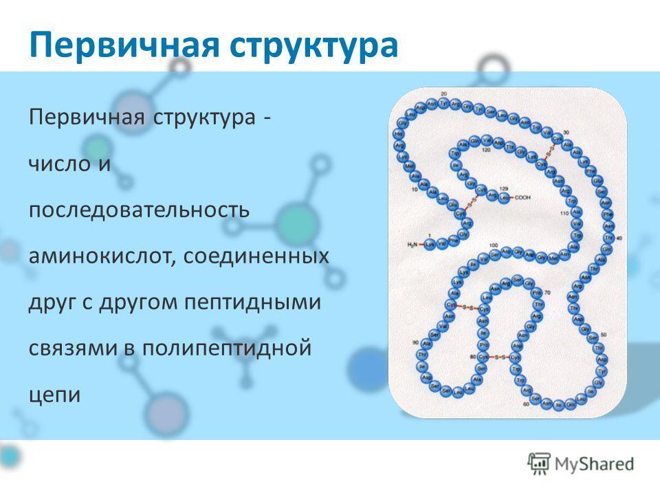 Первичная структура Первичная структура - число и последовательность аминокислот, соединенных друг с другом пептидными связями в полипептидной цепи