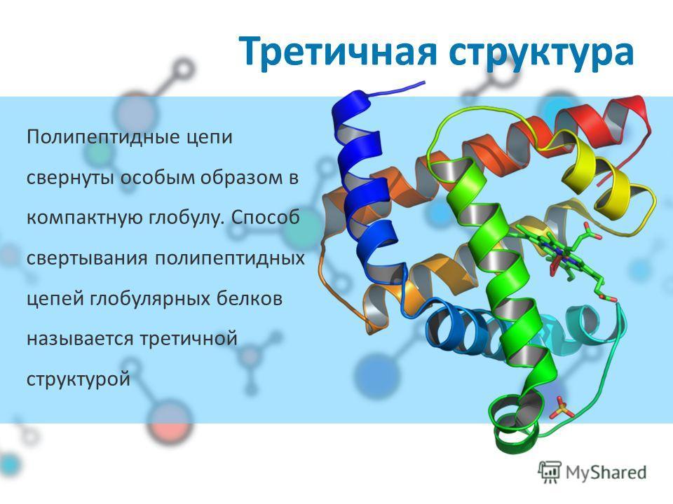 Третичная структура Полипептидные цепи свернуты особым образом в компактную глобулу. Способ свертывания полипептидных цепей глобулярных белков называется третичной структурой