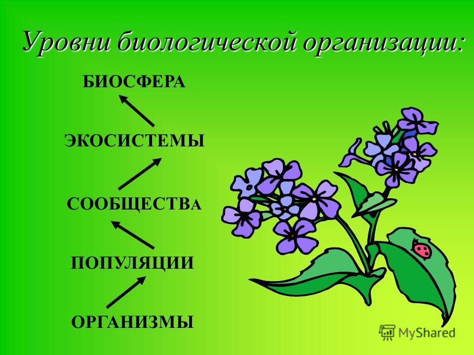 Уровни биологической организации: ЭКОСИСТЕМЫ БИОСФЕРА СООБЩЕСТВ А ПОПУЛЯЦИИ ОРГАНИЗМЫ