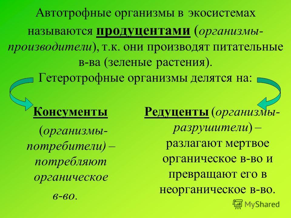 Автотрофные организмы в экосистемах называются продуцентами ( организмы- производители), т.к. они производят питательные в-ва (зеленые растения). Гетеротрофные организмы делятся на: Консументы (организмы- потребители) – потребляют органическое в-во.
