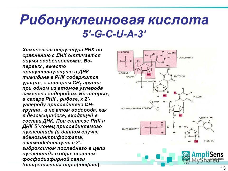 13 Рибонуклеиновая кислота 5-G-C-U-A-3 Химическая структура РНК по сравнению с ДНК отличается двумя особенностями. Во- первых, вместо присутствующего в ДНК тимидина в РНК содержится урацил, в котором СН 3 -группа при одном из атомов углерода заменена