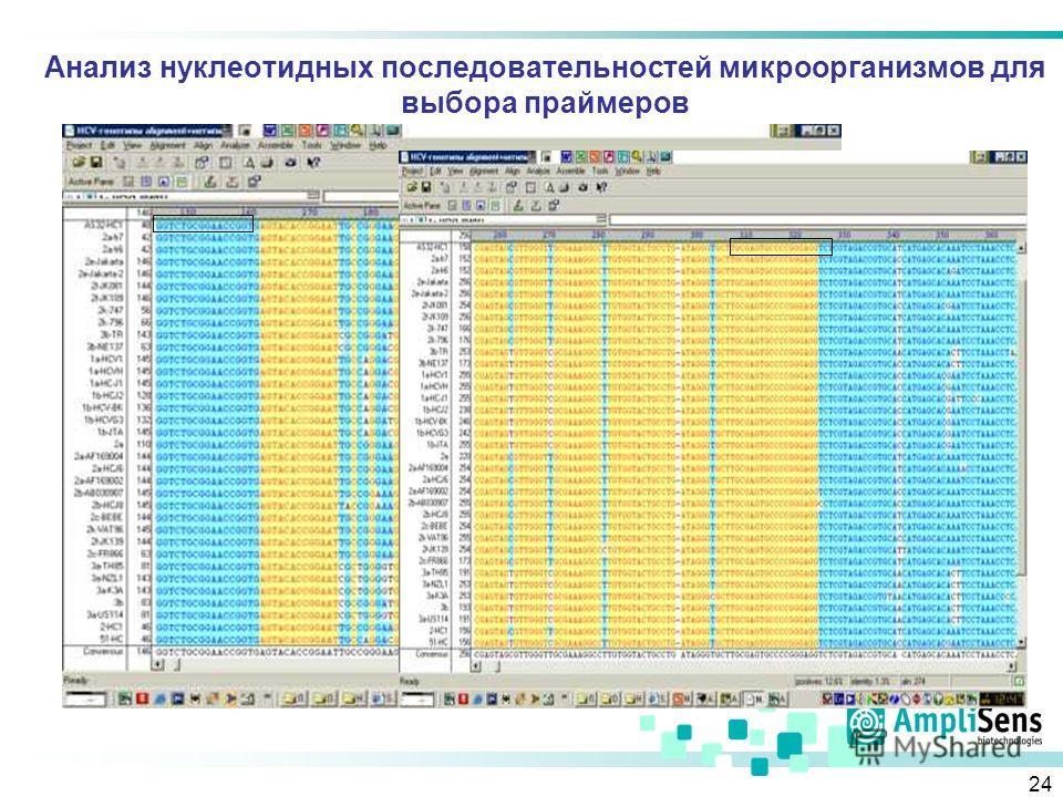 24 Анализ нуклеотидных последовательностей микроорганизмов для выбора праймеров