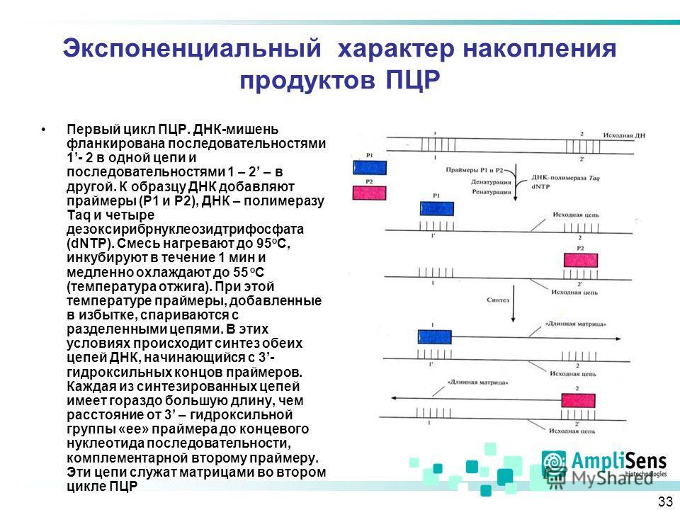 33 Экспоненциальный характер накопления продуктов ПЦР Первый цикл ПЦР. ДНК-мишень фланкирована последовательностями 1- 2 в одной цепи и последовательностями 1 – 2 – в другой. К образцу ДНК добавляют праймеры (Р1 и Р2), ДНК – полимеразу Taq и четыре д