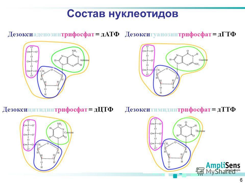 6 Состав нуклеотидов Дезоксиаденозинтрифосфат = д АТФДезоксигуанозинтрифосфат = дГТФ Дезоксицитидинтрифосфат = д ЦТФДезокситимидинтрифосфат = дТТФ