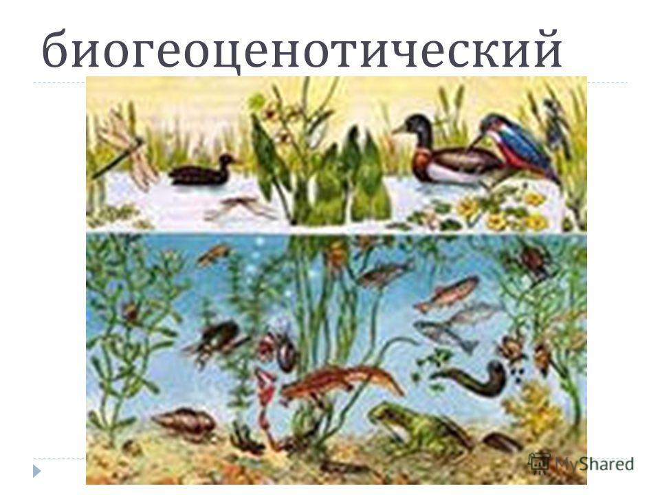 биогеоценотический
