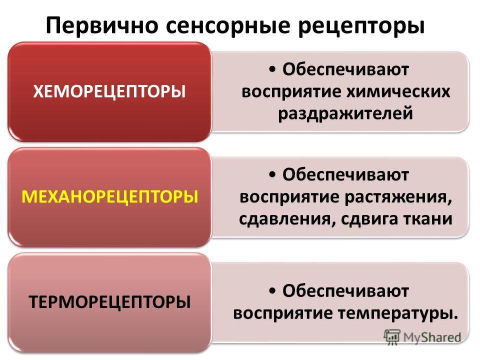 Первично сенсорные рецепторы Обеспечивают восприятие химических раздражителей ХЕМОРЕЦЕПТОРЫ Обеспечивают восприятие растяжения, сдавления, сдвига ткани МЕХАНОРЕЦЕПТОРЫ Обес печив ают воспр иятие темпе ратур ы. ТЕРМОРЕЦЕПТОРЫ