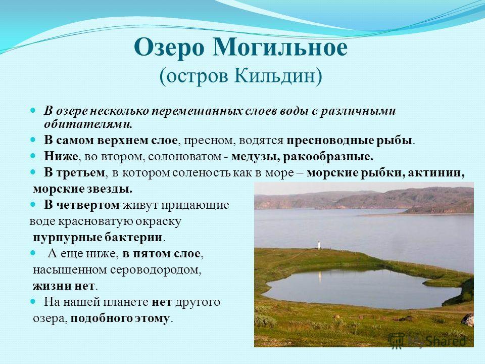 Озеро Могильное (остров Кильдин) В озере несколько перемешанных слоев воды с различными обитателями. В самом верхнем слое, пресном, водятся пресноводные рыбы. Ниже, во втором, солоноватом - медузы, ракообразные. В третьем, в котором соленость как в м