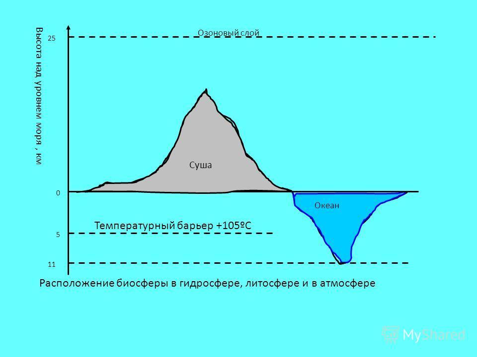Озоновый слой Океан 11 Высота над уровнем моря, км Суша 25 0 5 Температурный барьер +105ºС Расположение биосферы в гидросфере, литосфере и в атмосфере