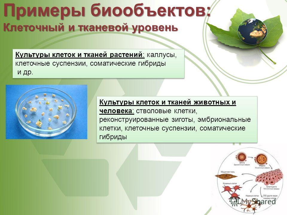 Примеры биообъектов: Клеточный и тканевой уровень Культуры клеток и тканей растений: каллусы, клеточные суспензии, соматические гибриды и др. Культуры клеток и тканей растений: каллусы, клеточные суспензии, соматические гибриды и др. Культуры клеток