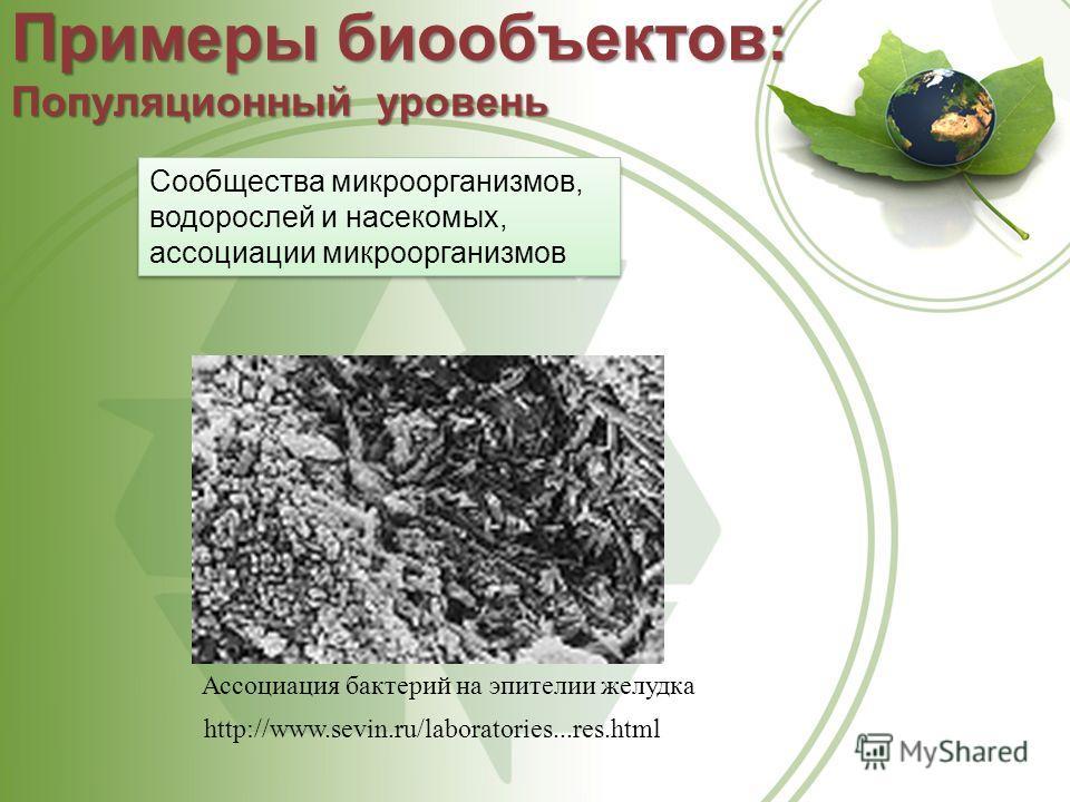 Ассоциация бактерий на эпителии желудка http://www.sevin.ru/laboratories...res.html Примеры биообъектов: Популяционный уровень Сообщества микроорганизмов, водорослей и насекомых, ассоциации микроорганизмов