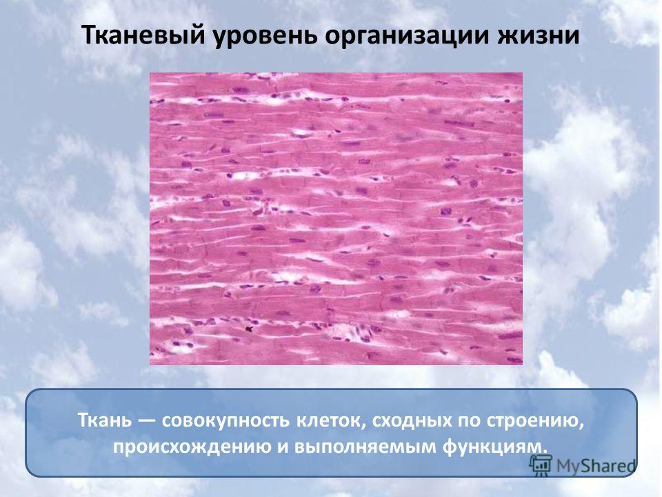 Ткань совокупность клеток, сходных по строению, происхождению и выполняемым функциям. Тканевый уровень организации жизни