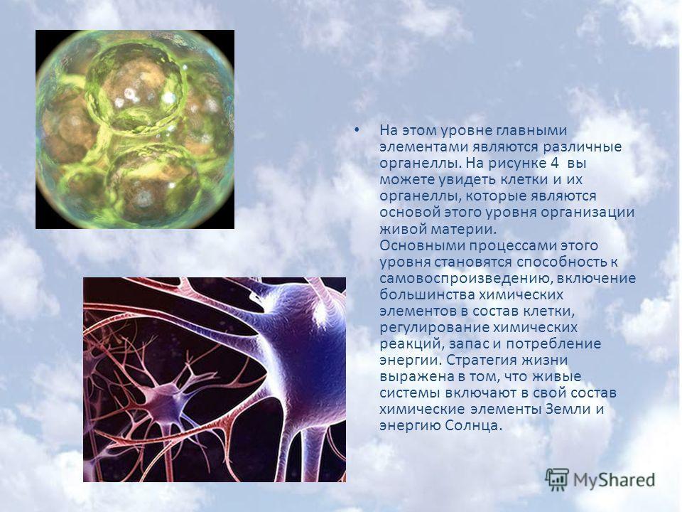 На этом уровне главными элементами являются различные органеллы. На рисунке 4 вы можете увидеть клетки и их органеллы, которые являются основой этого уровня организации живой материи. Основными процессами этого уровня становятся способность к самовос