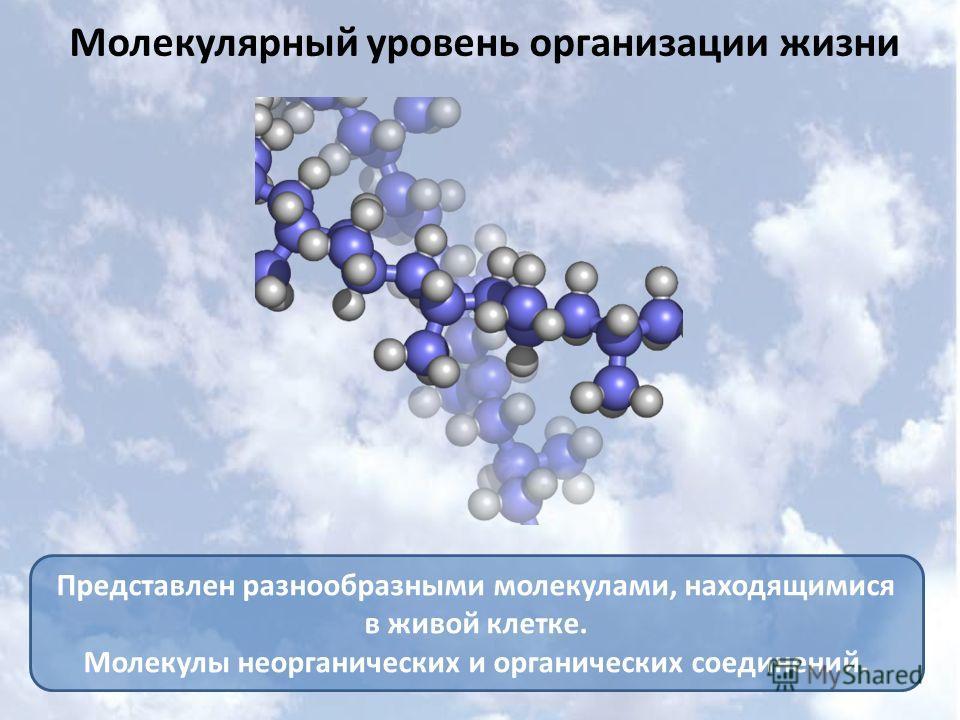 Молекулярный уровень организации жизни Представлен разнообразными молекулами, находящимися в живой клетке. Молекулы неорганических и органических соединений.