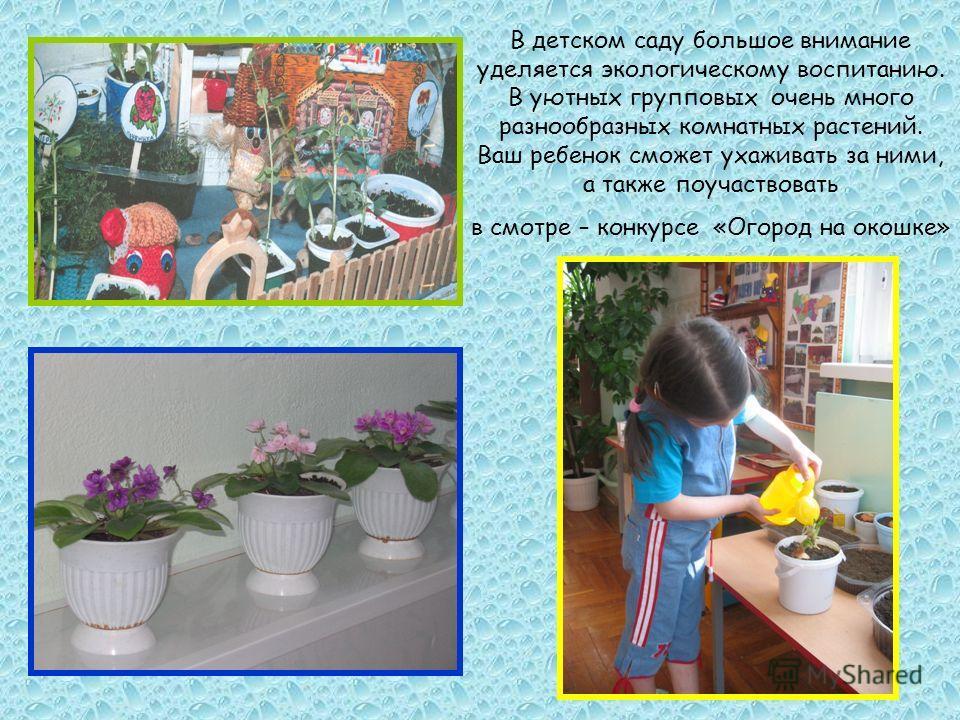 В детском саду большое внимание уделяется экологическому воспитанию. В уютных групповых очень много разнообразных комнатных растений. Ваш ребенок сможет ухаживать за ними, а также поучаствовать в смотре – конкурсе «Огород на окошке»