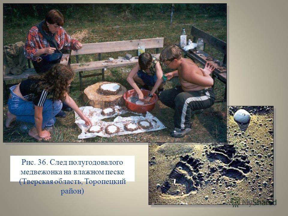 Рис. 36. След полугодовалого медвежонка на влажном песке (Тверская область, Торопецкий район)