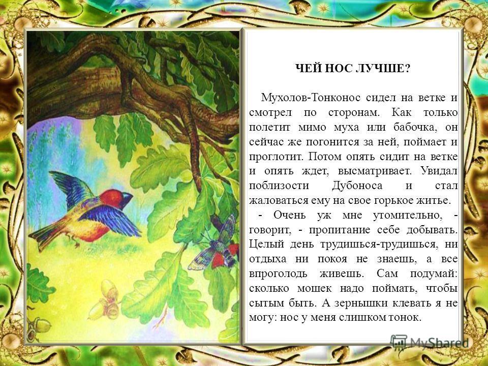 ЧЕЙ НОС ЛУЧШЕ? Мухолов-Тонконос сидел на ветке и смотрел по сторонам. Как только полетит мимо муха или бабочка, он сейчас же погонится за ней, поймает и проглотит. Потом опять сидит на ветке и опять ждет, высматривает. Увидал поблизости Дубоноса и ст