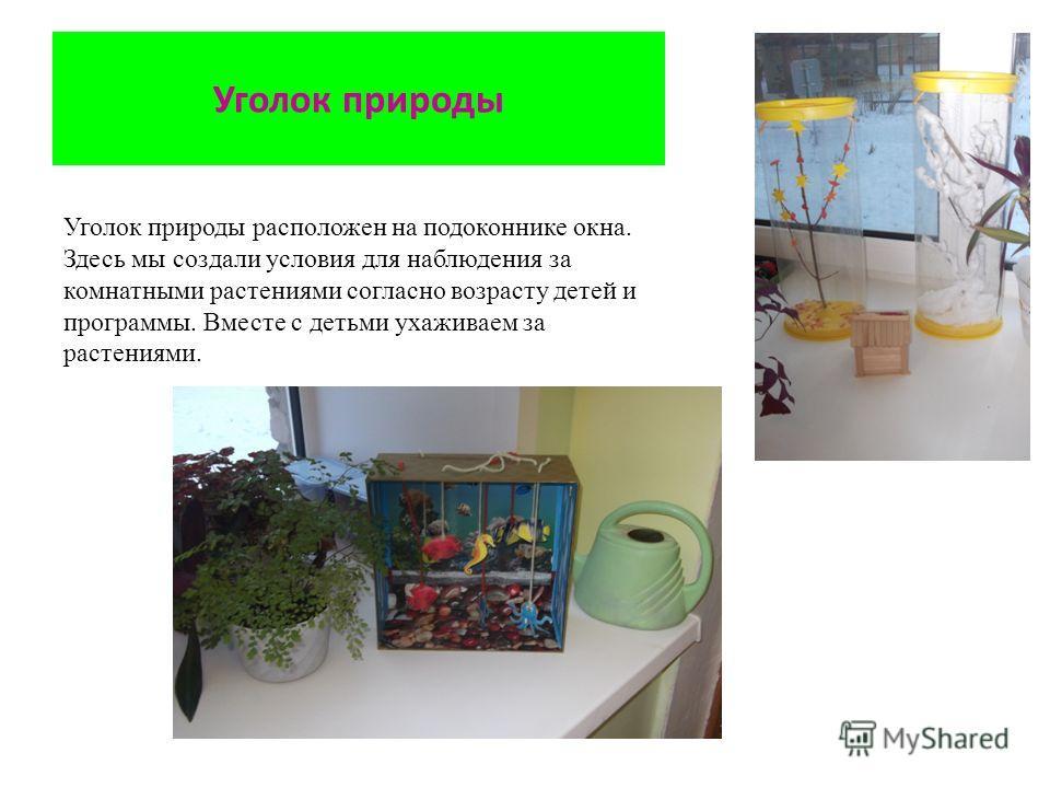 Уголок природы Уголок природы расположен на подоконнике окна. Здесь мы создали условия для наблюдения за комнатными растениями согласно возрасту детей и программы. Вместе с детьми ухаживаем за растениями.
