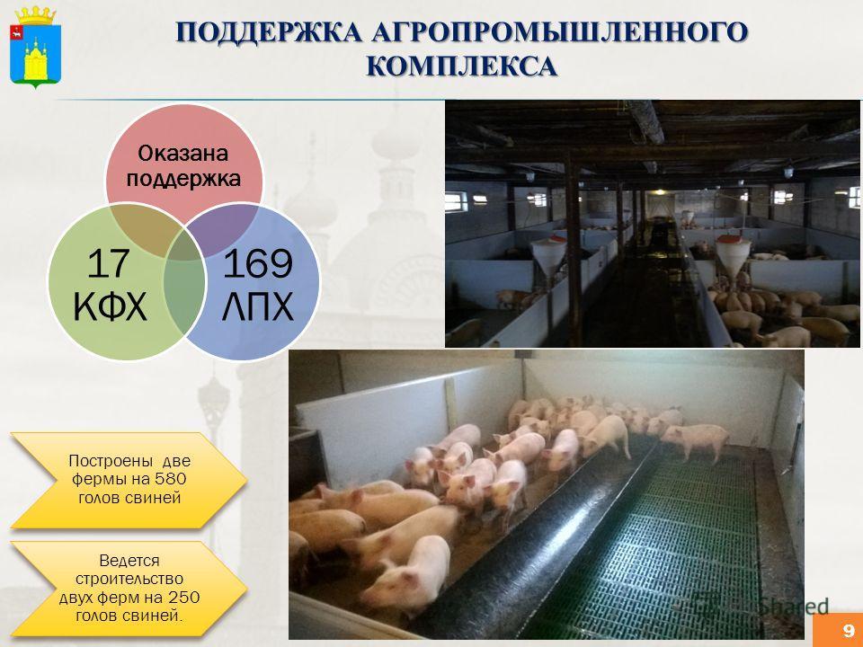 ПОДДЕРЖКА АГРОПРОМЫШЛЕННОГО КОМПЛЕКСА Оказана поддержка 169 ЛПХ 17 КФХ Построены две фермы на 580 голов свиней Ведется строительство двух ферм на 250 голов свиней. 9