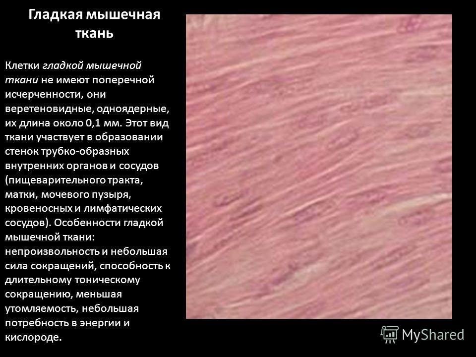 Гладкая мышечная ткань Клетки гладкой мышечной ткани не имеют поперечной исчерченности, они веретеновидные, одноядерные, их длина около 0,1 мм. Этот вид ткани участвует в образовании стенок трубко-образных внутренних органов и сосудов (пищеварительно