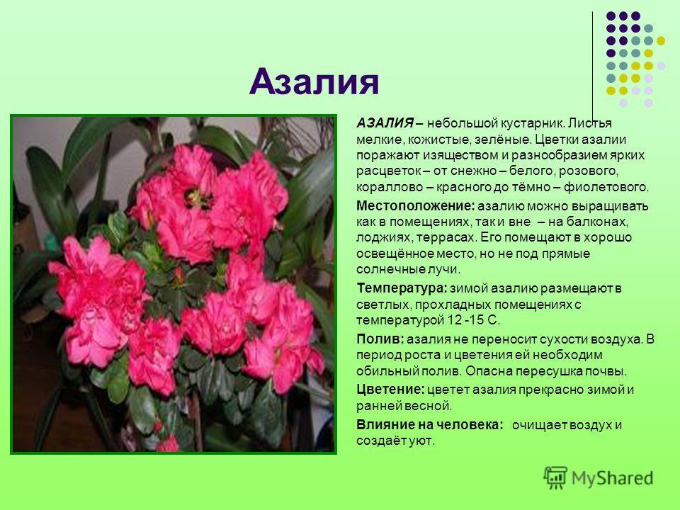 Азалия АЗАЛИЯ – небольшой кустарник. Листья мелкие, кожистые, зелёные. Цветки азалии поражают изяществом и разнообразием ярких расцветок – от снежно – белого, розового, кораллово – красного до тёмно – фиолетового. Местоположение: азалию можно выращив