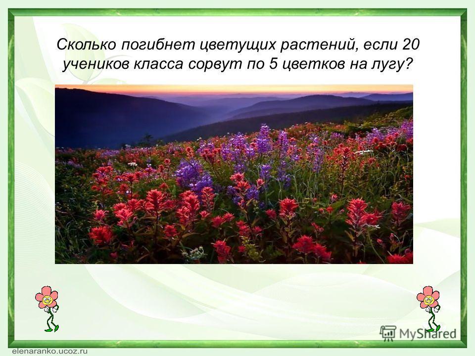 Сколько погибнет цветущих растений, если 20 учеников класса сорвут по 5 цветков на лугу?