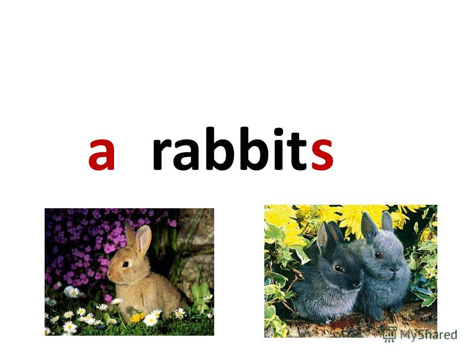 rabbitas