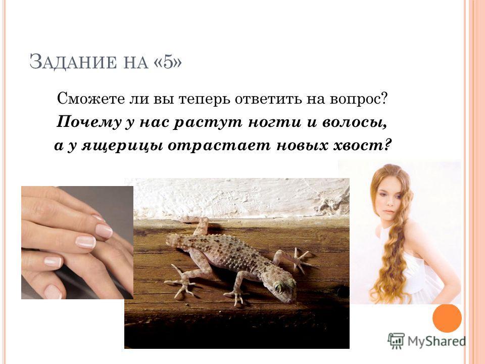 З АДАНИЕ НА «5» Сможете ли вы теперь ответить на вопрос? Почему у нас растут ногти и волосы, а у ящерицы отрастает новых хвост?