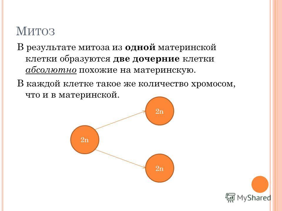 М ИТОЗ В результате митоза из одной материнской клетки образуются две дочерние клетки абсолютно похожие на материнскую. В каждой клетке такое же количество хромосом, что и в материнской. 2n2n 2n