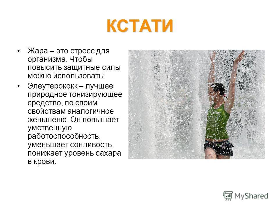 КСТАТИ Жара – это стресс для организма. Чтобы повысить защитные силы можно использовать: Элеутерококк – лучшее природное тонизирующее средство, по своим свойствам аналогичное женьшеню. Он повышает умственную работоспособность, уменьшает сонливость, п