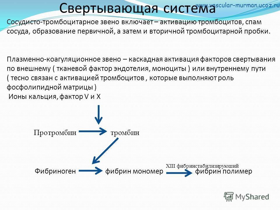 Свертывающая система Сосудисто-тромбоцитарное звено включает – активацию тромбоцитов, спам сосуда, образование первичной, а затем и вторичной тромбоцитарной пробки. Плазменно-коагуляционное звено – каскадная активация факторов свертывания по внешнему