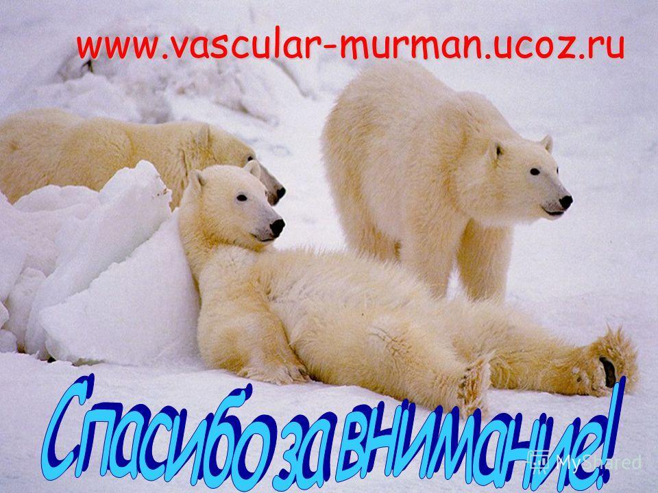 www.vascular-murman.ucoz.ru