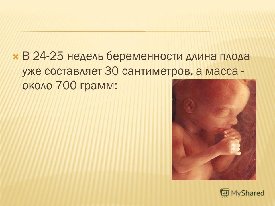 В 24-25 недель беременности длина плода уже составляет 30 сантиметров, а масса - около 700 грамм: