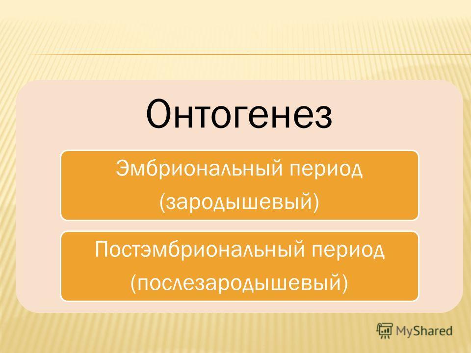 Онтогенез Эмбриональный период (зародышевый) Постэмбриональный период (послезародышевый)