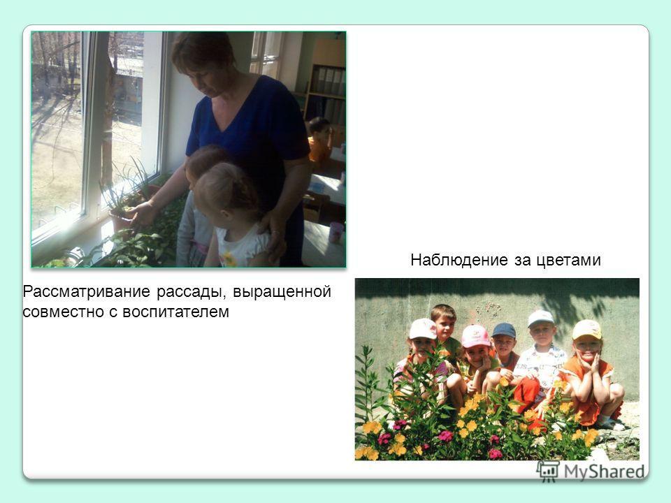 Рассматривание рассады, выращенной совместно с воспитателем Наблюдение за цветами