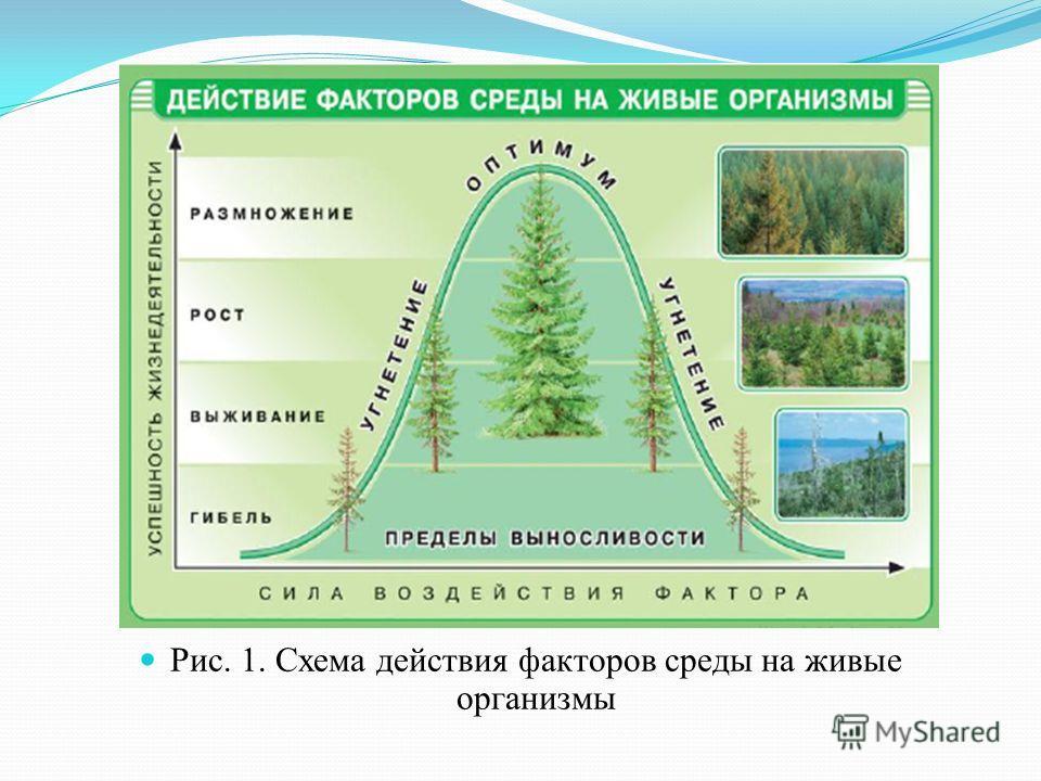 Рис. 1. Схема действия факторов среды на живые организмы